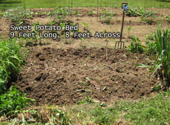 sweet potato bed