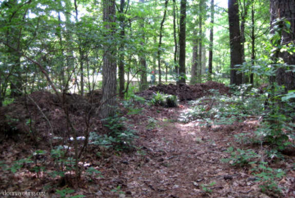 compost piles in woods