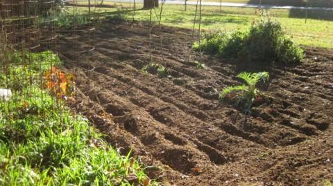 November- Garden Tilled