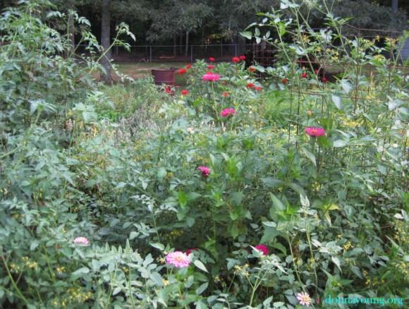 garden tangle