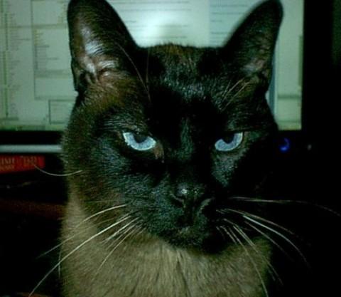 Kitty at Desk