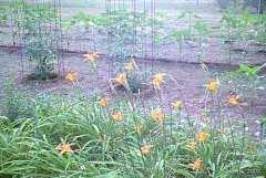Main Garden III
