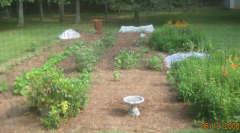 garden-6-12-08