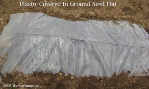 seed-flat