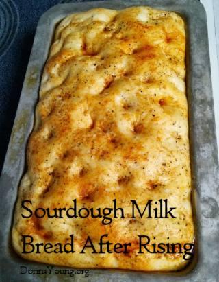 sourdough-milk-bread-ar