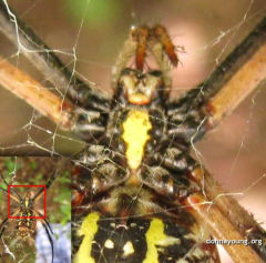 Strangest Photo in 2008, Argiope