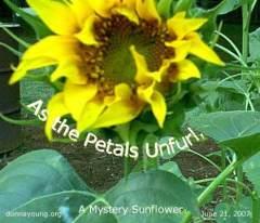 As the Petals Unfurl