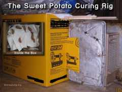 Sweet Potato Curing Rig
