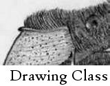 High School Drawing Class