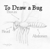 Draw An Insect: Basic Insect Anatomy