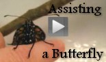 Videos - Monarch Butterfly Number 3