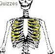 Skeleton Quiz